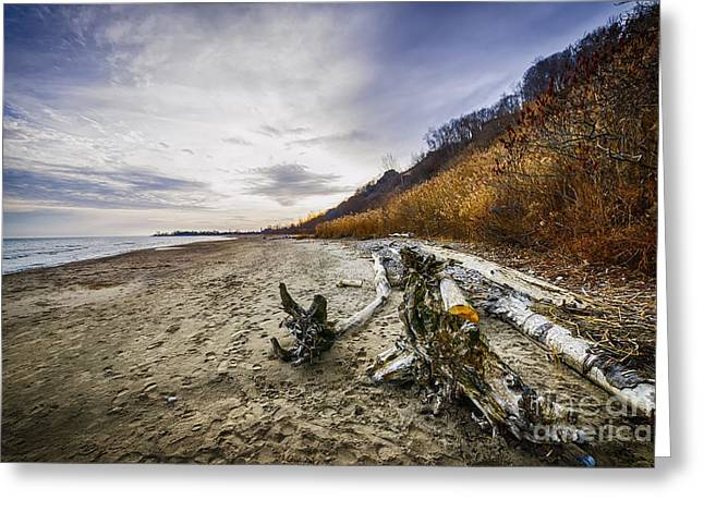 Desert Lake Greeting Cards - Beach at Scarborough Bluffs Greeting Card by Elena Elisseeva