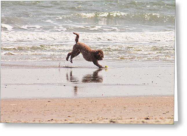 Dog Play Sea Greeting Cards - Beach Ball Greeting Card by Jessica Brown