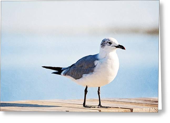 Beach Begger Greeting Card by Carolyn Cochrane
