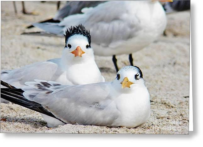 Beach Bird Hairdo Greeting Card by Judy Via-Wolff
