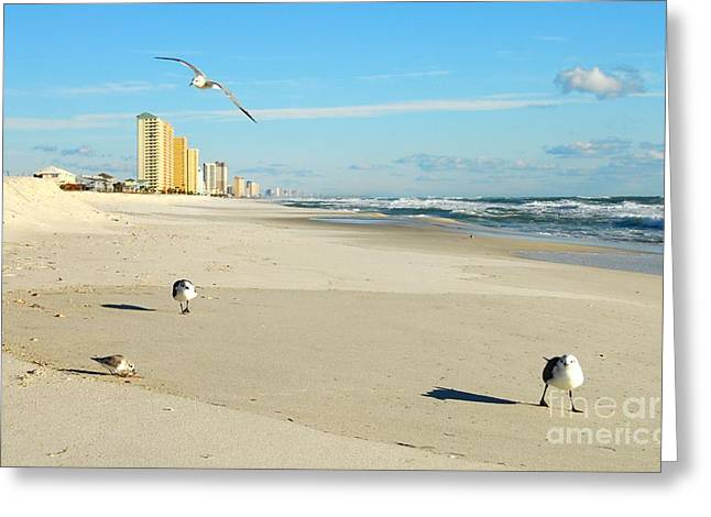 Panama City Beach Greeting Cards - Beach Birds Greeting Card by Anthony Wilkening