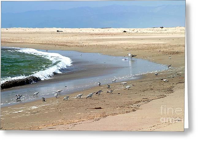 Ventura California Greeting Cards - Beach Birds Greeting Card by Henrik Lehnerer