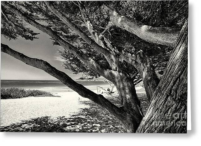 Monterey Bay Image Greeting Cards - Beach Branches Greeting Card by George Oze
