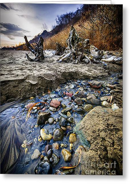 Flowing Greeting Cards - Beach brook at Scarborough Bluffs Greeting Card by Elena Elisseeva