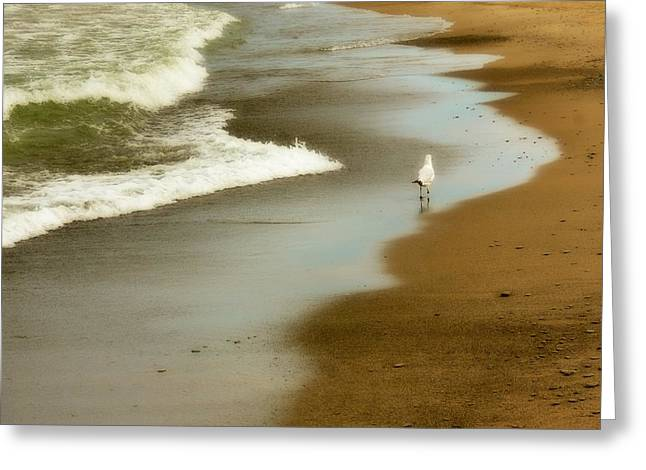 Beach Bum Greeting Card by Gothicolors Donna Snyder
