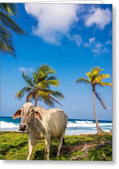 Miel Greeting Cards - Beach Cow Greeting Card by Jess Kraft
