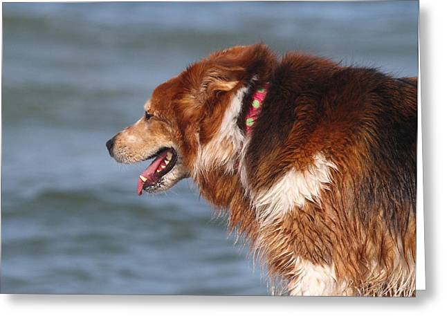 Doggy Cards Greeting Cards - Beach Dog Greeting Card by Cathy Lindsey
