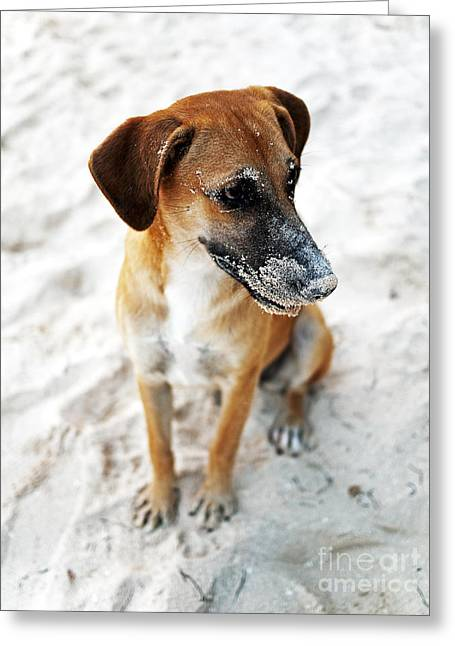 Dog Beach Print Greeting Cards - Beach Dog Greeting Card by John Rizzuto