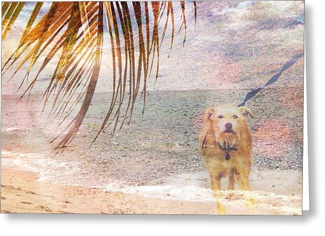 Rincon Greeting Cards - Beach Dog Greeting Card by Loretta Cassiano
