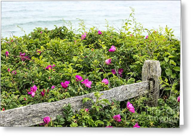 Beach Roses Greeting Cards - Beach Dreams Greeting Card by Michelle Wiarda