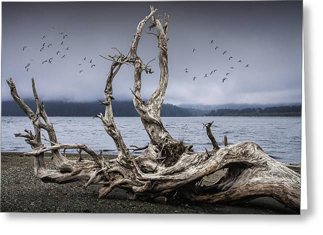 Foggy Beach Greeting Cards - Beach Driftwood Sculpture on Vancouver Island Greeting Card by Randall Nyhof