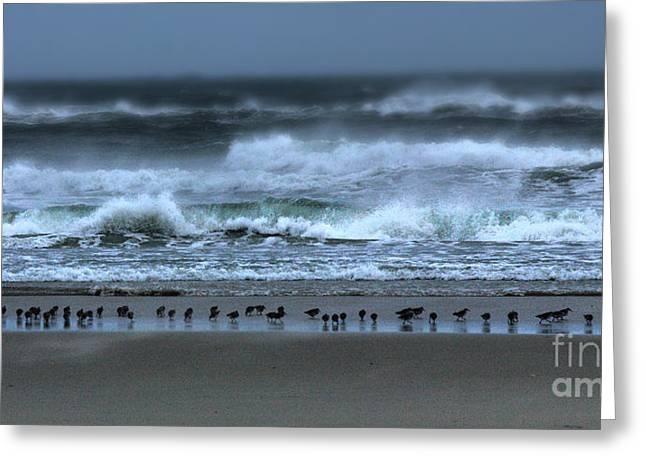 Beach Feast - Outer Banks Ocracoke Greeting Card by Dan Carmichael