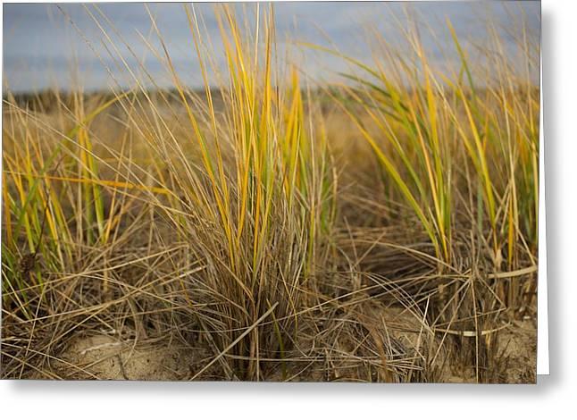Beach Grass Greeting Card by Allan Morrison