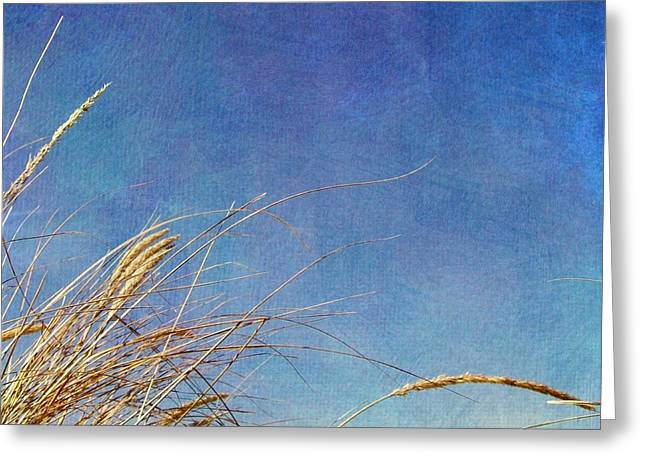 Beach Grass In The Wind Greeting Card by Michelle Calkins