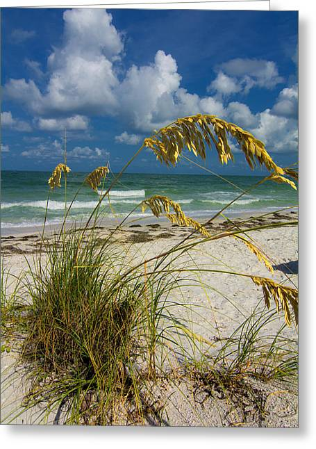 Ocean Art Photography Greeting Cards - Beach Grass Greeting Card by Kevin Cable