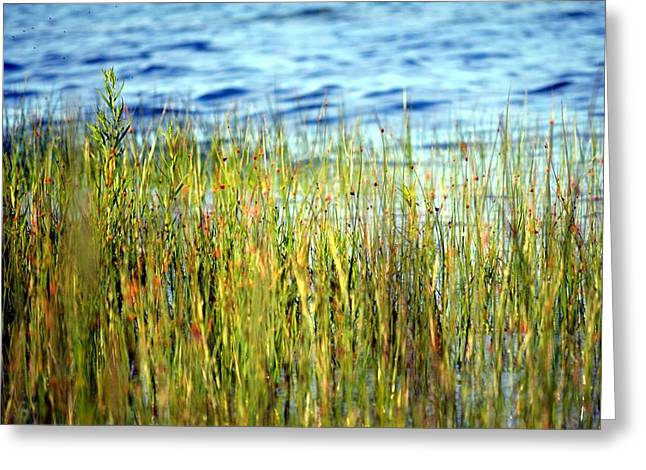 Elk Rapids Greeting Cards - Beach Grass Greeting Card by Lorraine Paffenroth