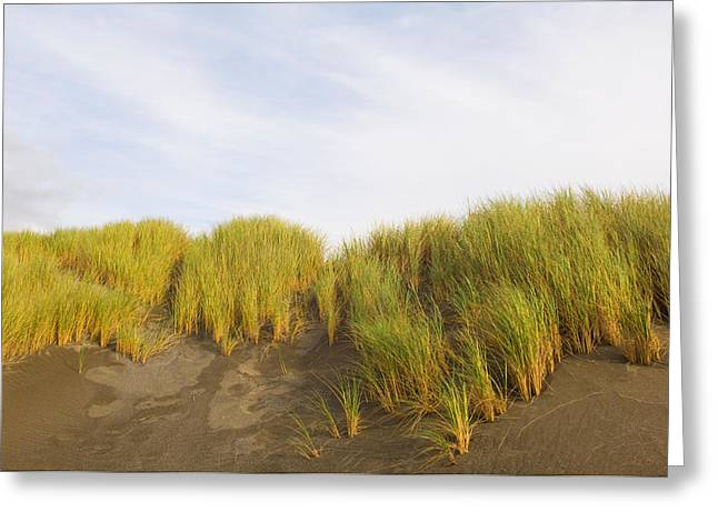 Oregon Pistol River Greeting Cards - Beach Grass On Sand, Pistol River State Greeting Card by Panoramic Images