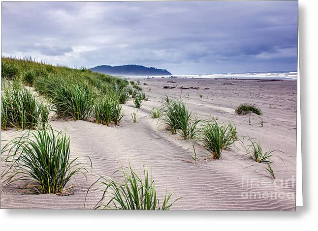 Haybales Greeting Cards - Beach Grass Greeting Card by Robert Bales