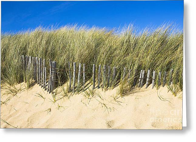 Sand Fences Greeting Cards - Beach Grass Greeting Card by Sophie De Roumanie