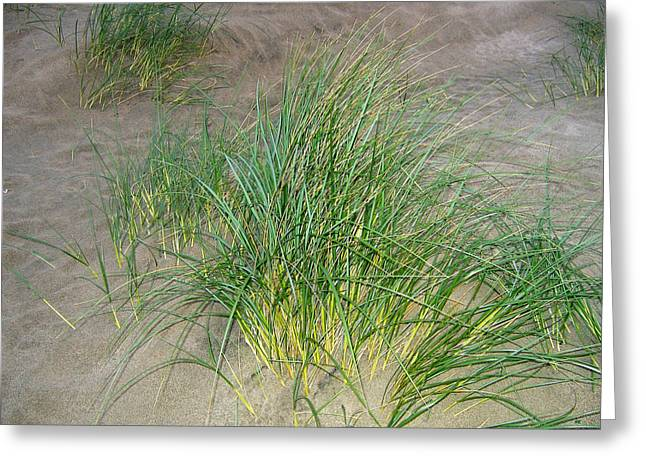 Thrive Greeting Cards - Beach Grass Greeting Card by Will Borden