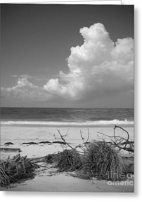 Jeremy Greeting Cards - Beach Greeting Card by Jeremy Kuster