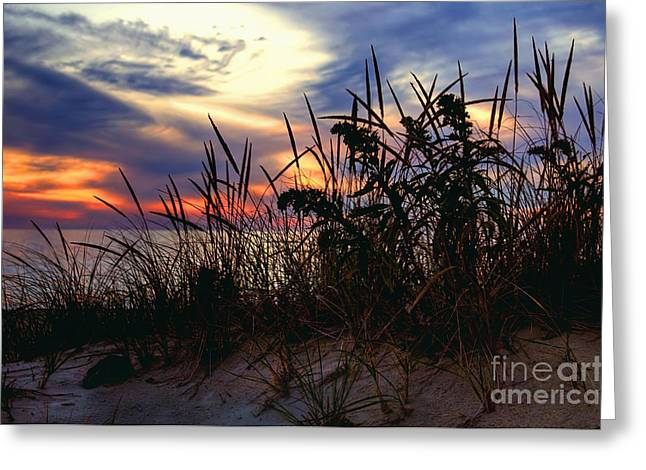 Sandy Beaches Greeting Cards - Beach Memories - Cape Cod Sunset Greeting Card by Joann Vitali