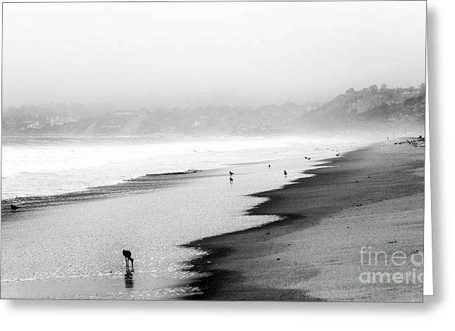 Pacific Ocean Prints Greeting Cards - Beach Morning Greeting Card by John Rizzuto