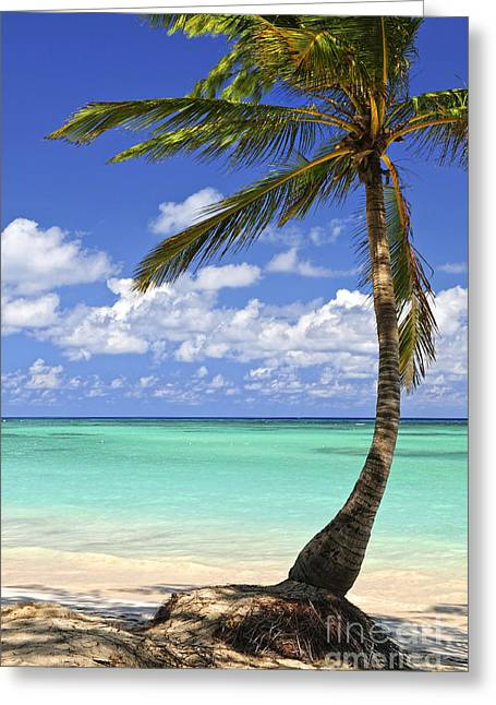 Tropical Trees Greeting Cards - Beach of a tropical island Greeting Card by Elena Elisseeva