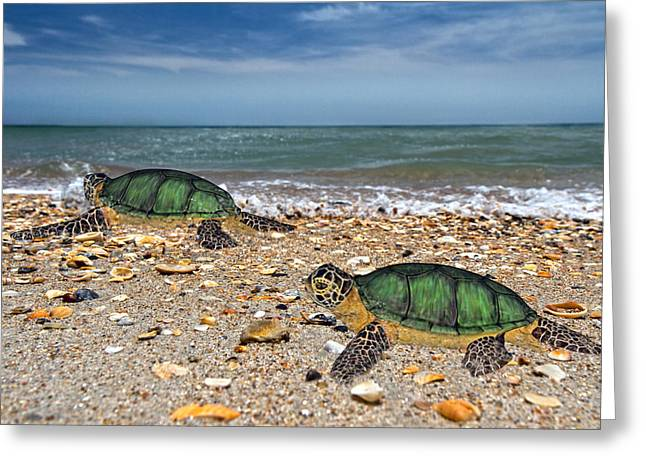 Terrapin Greeting Cards - Beach Pals II Greeting Card by Betsy C  Knapp