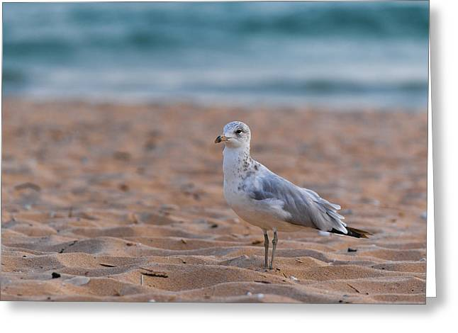 Sea Birds Greeting Cards - Beach Patrol Greeting Card by Sebastian Musial