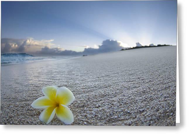 Frangipani Greeting Cards - Beach Plumeria Greeting Card by Sean Davey