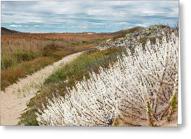 Spring Landscape Greeting Cards - Beach Plums Greeting Card by Bill  Wakeley