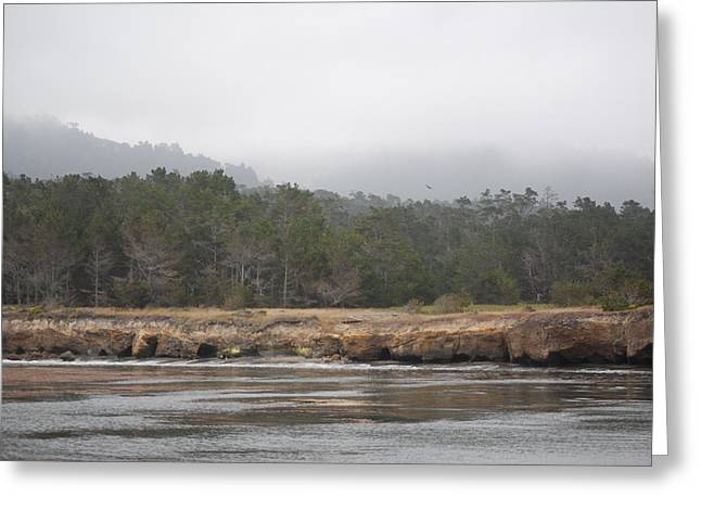 Point Lobos Greeting Cards - Beach Point Lobos F Greeting Card by Mary Chappell