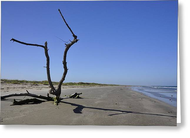 Angela Castillo Greeting Cards - Beach Remains Greeting Card by Cherie Haines