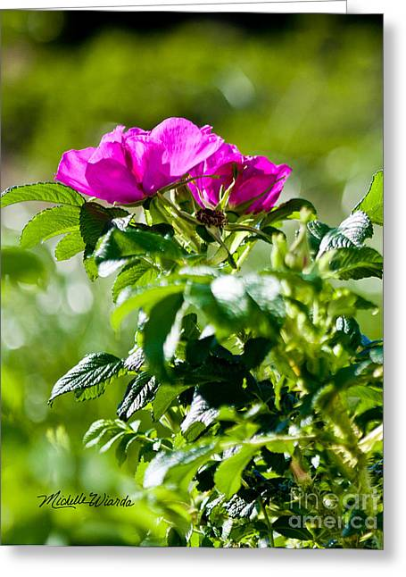 Botanical Beach Greeting Cards - Beach Rose Beauties Greeting Card by Michelle Wiarda