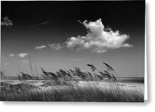 Sea Oats Greeting Cards - Beach Scene Greeting Card by Rudy Umans