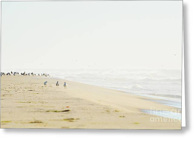 Clean Water Greeting Cards - Beach and Birds Landscape Greeting Card by Anahi DeCanio - ArtyZen Studios