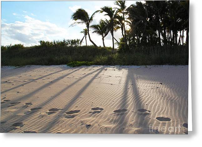 Michelle Greeting Cards - Beach Shadows Greeting Card by Michelle Wiarda