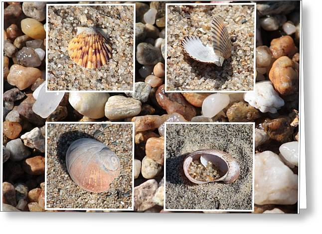 Agate Beach Greeting Cards - Beach Shells and Rocks Collage Greeting Card by Carol Groenen