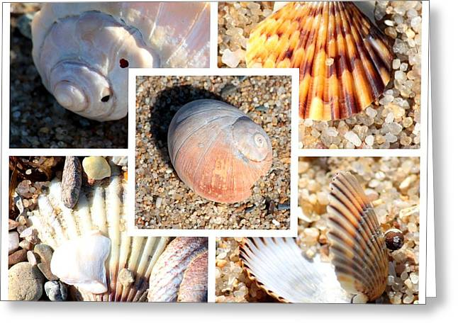 Colored Shell Greeting Cards - Beach Shells Collage Greeting Card by Carol Groenen