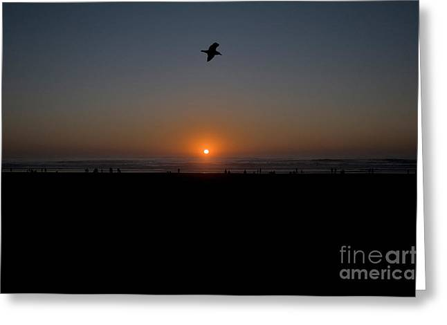Flying Seagull Greeting Cards - Beach Sunset Greeting Card by Mark Newman