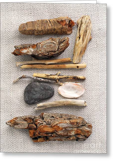 Driftwood Beach Greeting Cards - Beach treasures Greeting Card by Elena Elisseeva