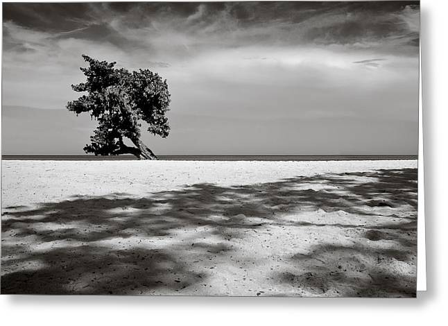 Picturesque Greeting Cards - Beach Tree Greeting Card by Dave Bowman