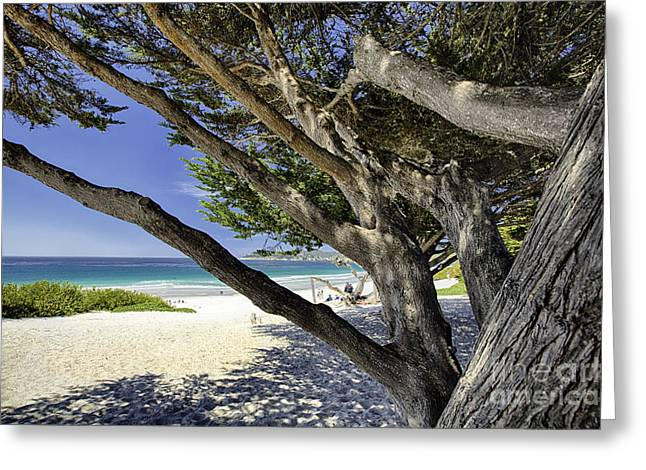Monterey Bay Image Greeting Cards - Beach View from Under a Tree Greeting Card by George Oze
