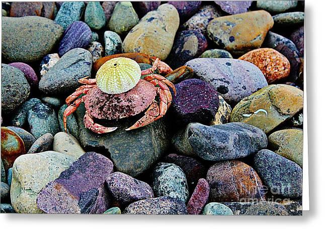 Eggheads Greeting Cards - Beach Wares - Egghead Crab Greeting Card by Barbara Griffin