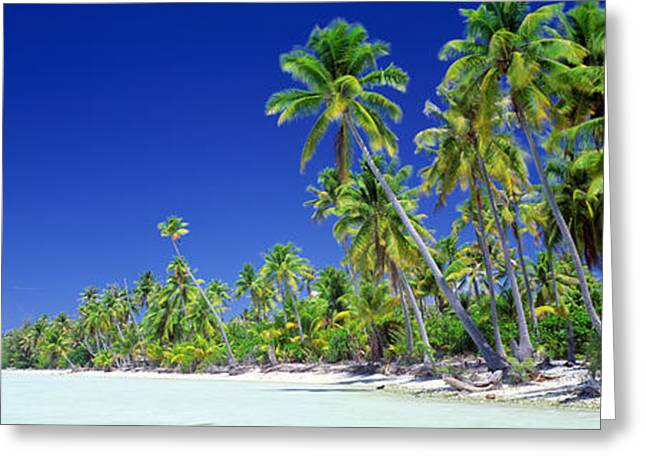 Pacific Grove Beach Greeting Cards - Beach With Palm Trees, Bora Bora, Tahiti Greeting Card by Panoramic Images