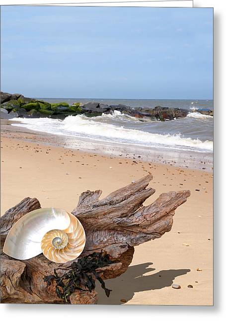 Geometric Artwork Greeting Cards - Beachcombing - Driftwood and Shells Greeting Card by Gill Billington