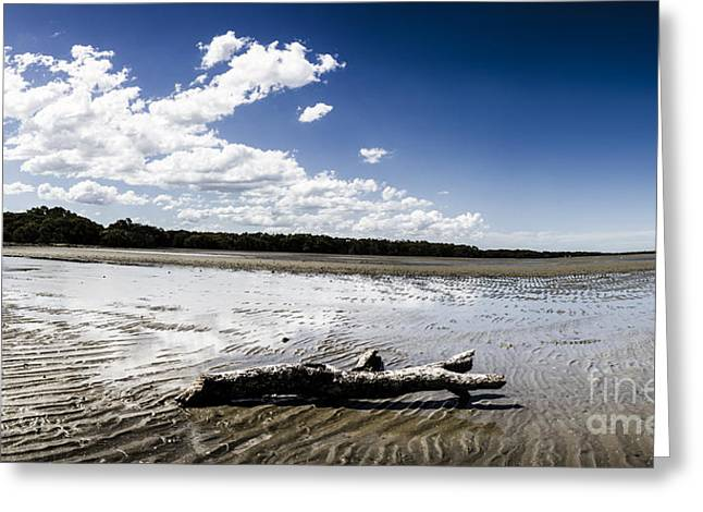 Deception Beach Greeting Cards - Beached driftwood Greeting Card by Ryan Jorgensen