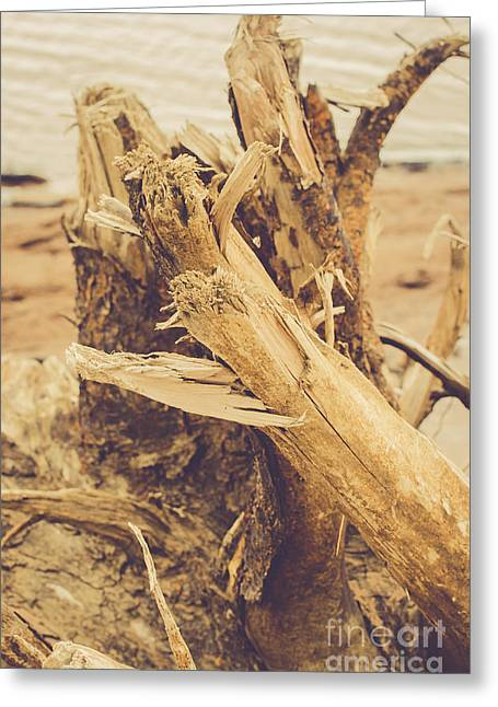 Driftwood Beach Greeting Cards - Beached Wood Greeting Card by Lisa Killins