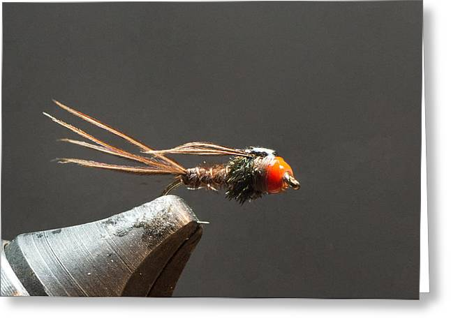 Hurl Greeting Cards - Bead Head Pheasant Tailed Nymph Greeting Card by Phil Rispin